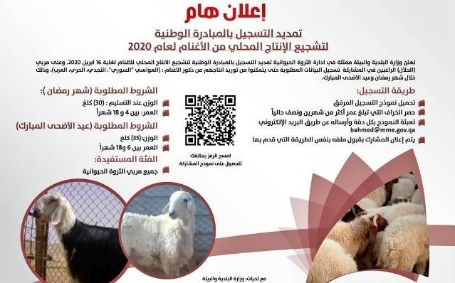 MME: Extending registration of national initiative to encourage local production of sheep until April 16